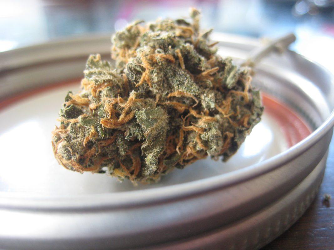 Konopie i marihuana